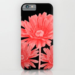 3 Pink Gerbera - Black Background iPhone Case