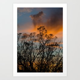 Desert Flora At Sunset - Bush  Art Print