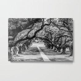Louisiana Path Through the Oaks Metal Print