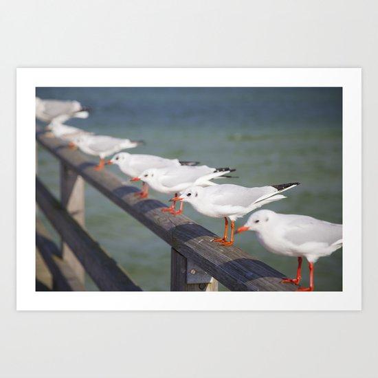Seagulls II Art Print