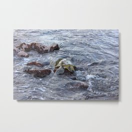 turtlebutt Metal Print