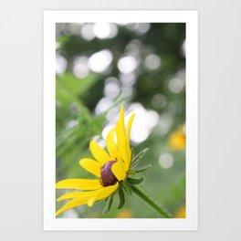 Sunflower & Bokeh Art Print