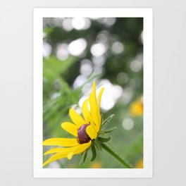 Sunflower & Bokeh Art Print