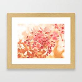 Almond Blossom in Apricot Framed Art Print