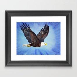 Bald eagle in flight Framed Art Print