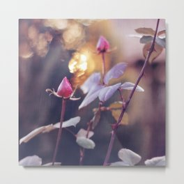 Rose Buds & Light of Gold / / Valentine's Day Card Metal Print