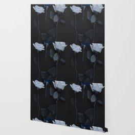 Blue roses on black Wallpaper