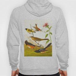 Chestnut-coloured Finch, Black-headed Siskin, Black crown Bunting, Arctic Ground Finch Hoody