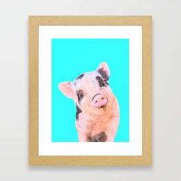 Baby Pig Turquoise Background Framed Art Print