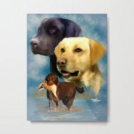 Labrador Retrievers Metal Print