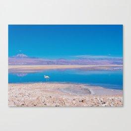 Flamingos in the Desert, San Pedro de Atacama, Chile Canvas Print