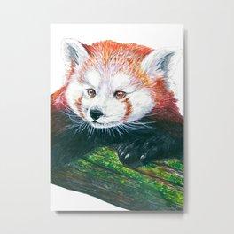 Red panda bear Metal Print