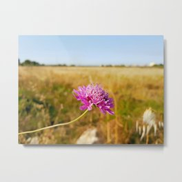 Apulian flower (2) Metal Print