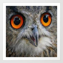 Owl Close up Art Print