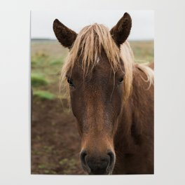 Horse in Iceland - nature photography Poster