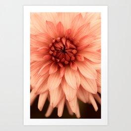 Prima Donna - Modern Botanical Photograph - Dahlia Flower Photo - Floral Print Art Print