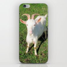 Billy 'The Goat' iPhone & iPod Skin