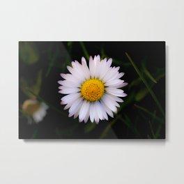 Daisy on dark background #3 Metal Print