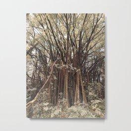 Banyan Tree Found on Hawaiian Hike Metal Print