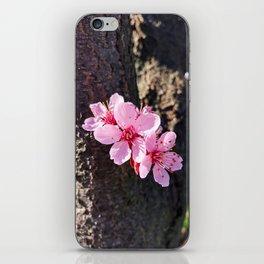 South Portland Spring 2018 (2) iPhone Skin