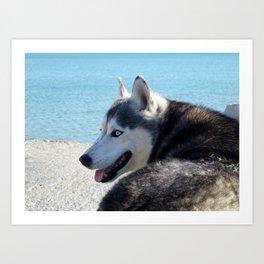 Female Husky  Art Print