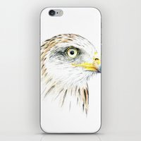 animal crew iPhone & iPod Skins featuring Animal by Andreas Derebucha