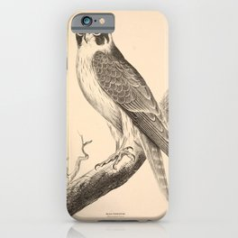 Vintage Print - Companion to Gould's Birds of Australia (1877) - White-Fronted Falcon iPhone Case