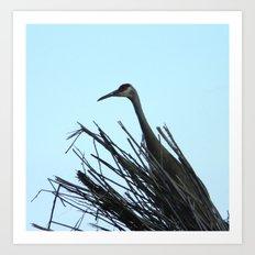 Crane Hiding Art Print