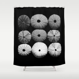 Sea Urchin Square... Shower Curtain