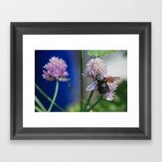 Carpenter Bee 1 Framed Art Print