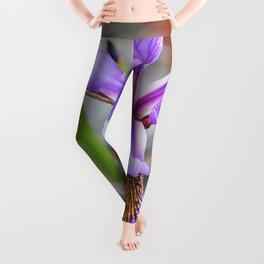 Iris. Leggings