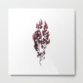 British Sea Weed Metal Print