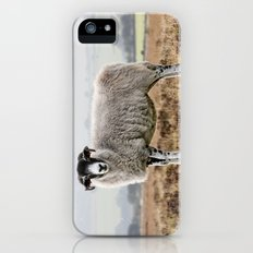 Sheep iPhone (5, 5s) Slim Case