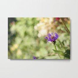 Flower Study No.2 Metal Print