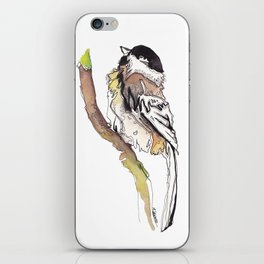 Black Capped Chickadee iPhone Skin