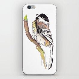 Black Capped Chickadee iPhone Skin