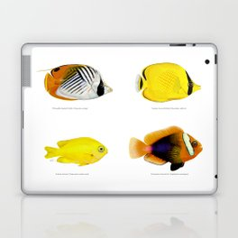 Plate of Tropical Fish Laptop & iPad Skin