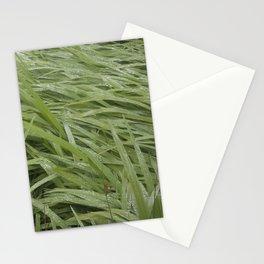 California Grass & Dew Stationery Cards