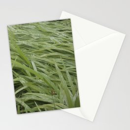 California Grass & Dew Stationery Cards