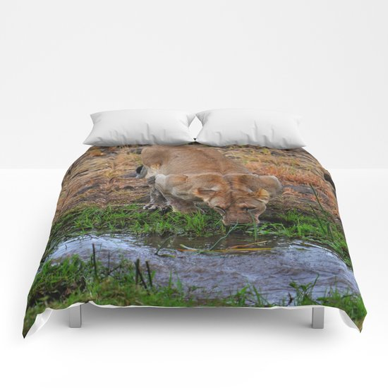 Lioness At The Waterhole Comforters