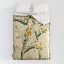 Dendrobium xanthophlebium (as Dendrobium marginatum Bateman ex Hook.f.) Curtis' 90 (Ser. 3 no. 20) Comforters