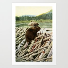 Fuertes, Louis Agassiz (1874-1927) - Burgess Animal Book 1920 (Beaver) Art Print