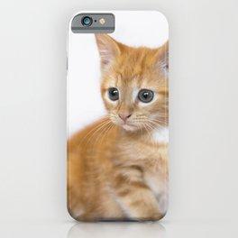 Ginger Kitten iPhone Case