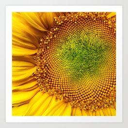 Perfect Sunflower Art Print