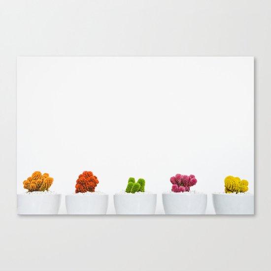 colorful cacti Canvas Print