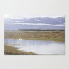 Swans of Iceland Canvas Print