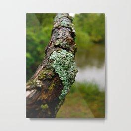 Dried Moss Metal Print