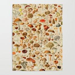 Vintage Mushroom Designs Collection Poster
