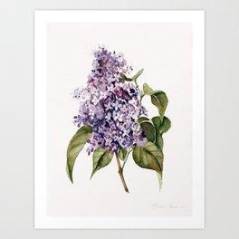 Lilac Branch Art Print