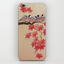 Java Sparrows in Japanese Maple Tree iPhone Skin